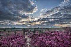 Härligt engelskt bygdlandskap över fält på solnedgångwi Arkivfoton