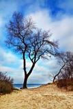 Härligt ensamt träd på en sanddyn royaltyfria bilder