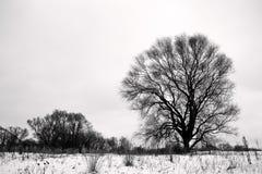 Härligt ensamt träd som växer på fältet Royaltyfria Bilder