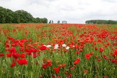 Härligt fält av blommor på bakgrund av trä och moln Arkivfoto