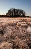 härligt fält fryst liggandevinter arkivbild