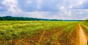Härligt fält i Moskvaregionen Fotografering för Bildbyråer