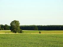 Härligt fält i sommar, Litauen arkivfoton
