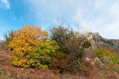 Härligt färghöstlandskap i berg royaltyfria foton