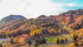 Härligt färgrikt av Autumn Leaves i Nagano PrefectureJapan arkivbilder