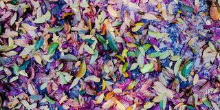 Härligt färgrikt blad på jordningen fotografering för bildbyråer