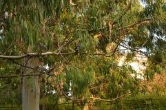 Härligt fågelträd royaltyfri bild