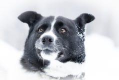 Snow förföljer Royaltyfria Foton