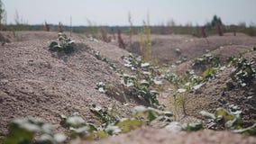 Härligt filmiskt plan av små steniga jordkullar judean öken arkivfilmer
