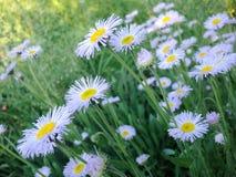 Härligt fjädra blom- bakgrund Arkivfoton