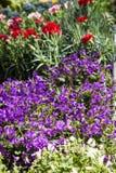 Blommor på marknadsför Royaltyfri Fotografi