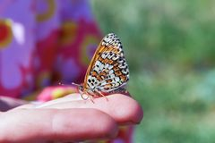 Härligt fjärilssammanträde på handen av ett barn Solen skiner ljust Blå himmel arkivfoton