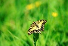 Härligt fjärilsslut upp Arkivfoton