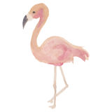 Härligt flamingo Arkivfoton