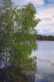 Härligt flodlandskap, reflexion av det stora trädet i lugna vatten, skognatur fridsam plats av sjön för vårsäsong Royaltyfri Bild