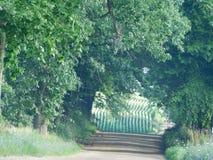 Härligt foto som tas av en väg med en cornfield Royaltyfria Bilder
