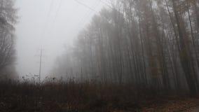 Härligt från naturen med dimma och molnet arkivfilmer