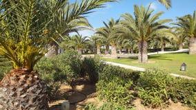Gömma i handflatan trädgården Arkivbild