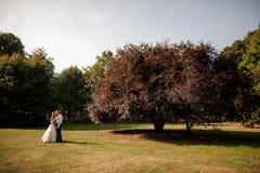 Härligt gift paranseende på ett fält för grönt gräs med ett stort träd royaltyfri bild