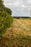 Härligt gjort klar fält med några buskar Arkivbild