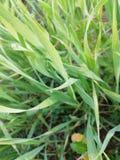 härligt gräs arkivfoton