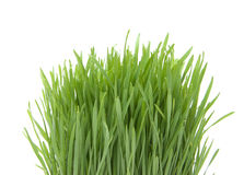 härligt gräs Royaltyfria Bilder