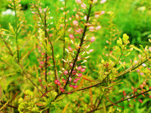 härligt gräs Fotografering för Bildbyråer