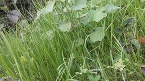härligt gräs Royaltyfri Fotografi
