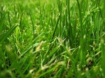 härligt gräs arkivbilder