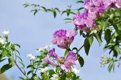 Härligt gräs blommar med eftermiddagljus I den gröna ängen i ljusa dagar Royaltyfria Foton