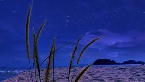 Härligt gräs blommar på natten Arkivbild