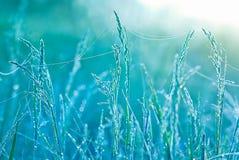 Härligt gräs med vattendroppar grunt djupfält Royaltyfri Bild