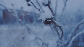 Härligt gräs under snön lager videofilmer