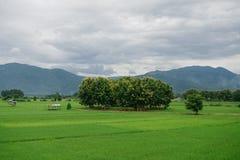 Härligt gräsplanfältlandskap fotografering för bildbyråer