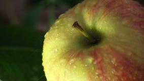 Härligt grönt äpple med vattendroppar arkivfilmer