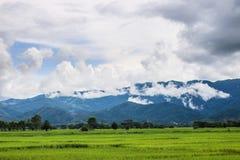 härligt grönt berg Arkivbilder