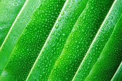 Härligt grönt blad med droppar av vatten Arkivbild