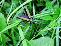 Härligt grönt fel på gräs och växt av släktet Trifolium Arkivfoto
