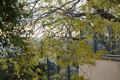 Härligt grönt filialträd i paris Royaltyfri Bild