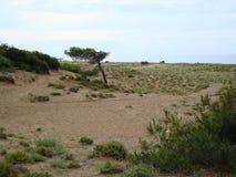 Härligt grönt gräs är i en oas Arkivbild