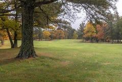 Härligt grönt gräs- landskap med färgrika höstträd fotografering för bildbyråer