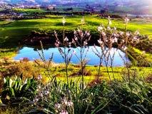 Härligt grönt landskap med den lilla sjön Arkivbild