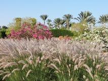 Härligt grönt landskap på plats i Egypten _ arkivbild