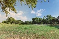 Härligt grönt stads- parkerar gräs- gräsmatta i Irving, Texas, USA Royaltyfri Fotografi