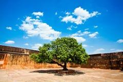 Härligt grönt träd Arkivbild
