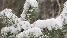 Härligt granträd som täckas med snö, övre sikt för slut Royaltyfri Fotografi