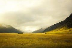 Härligt guld- fält med att förbluffa molnig bakgrund royaltyfri bild