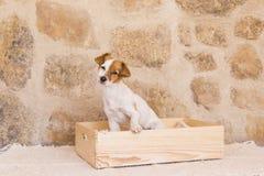 Härligt gulligt ungt sammanträde för liten hund i en wood ask och lookin royaltyfri foto