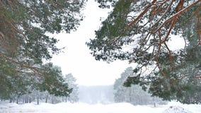 Härligt häftig snöstormjulträd i vinterlandskapnatur i sen afton i snöfalllandskap lager videofilmer