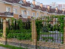 H?rligt h?gv?xt falskt staket med den gr?na murgr?nan arkivfoton
